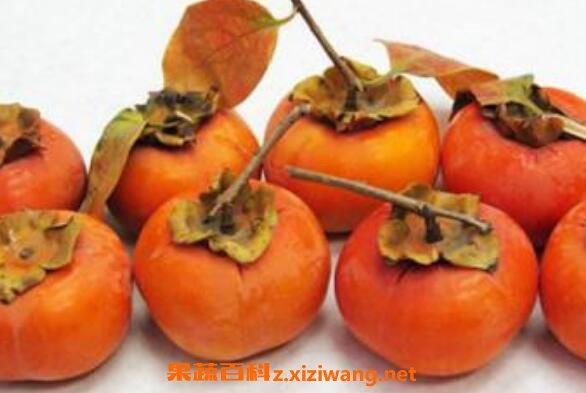 孕妇能吃柿子吗 孕妇吃柿子的好处和坏处